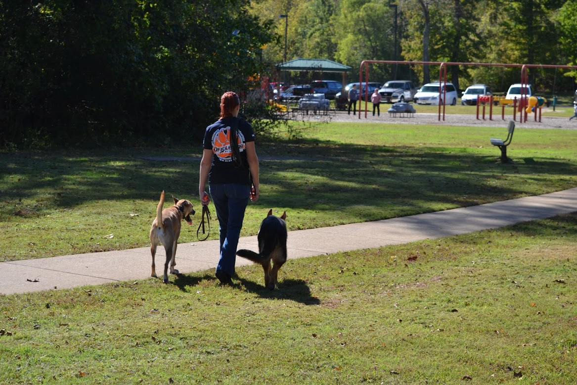 Loose Leash and Off-Leash Walking